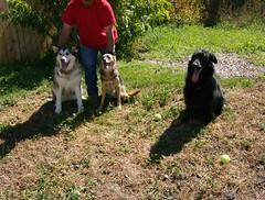 3 Dogs Sitting