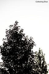 a silhouette