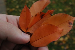 Holding leaves on Rugby Road