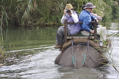 Elephant ATV