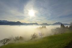 Sea of Fog - Fall at mount Rigi photo by Werner_B