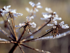 First Frost photo by TimAndrewsPhotography