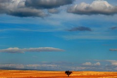 The Sky, the Clouds, the Land & the Lone Tree photo by Kawsar_K