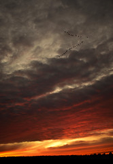 Sunset Geese photo by lovingyourwork.com