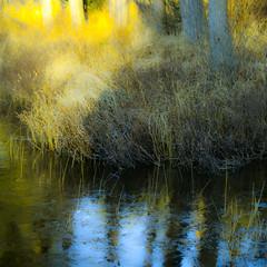 Herbes folles de lumière... reflet sur glace fragile... splendeur du contraste...!!! photo by Denis Collette...!!!
