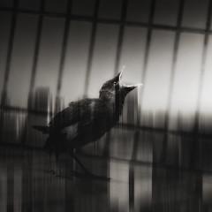++++++ photo by Amateur.Qin(秦)