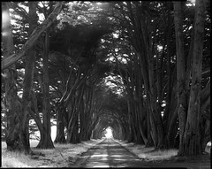 Cypress Tunnel photo by Summicron20/20