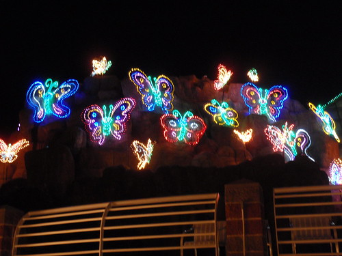 Butterflies in Christmas Lights