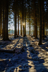 Sun through a dark winter forest photo by Fredde Nilsson