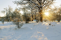 Sunny winter landscape (Explore) photo by Tim Lindstedt (Thanks for 200.000 views!)