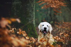 oh so happy in the forest photo by Ciscolo