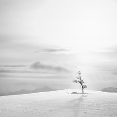 Alone photo by nicholasdyee