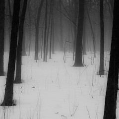 Winter Forest In Fog 003 photo by noahbw