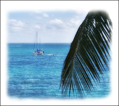 Sailboat Speeding Pass A Palm Frond photo by Simon__X