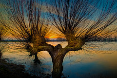 The Willow Man photo by unciepaul