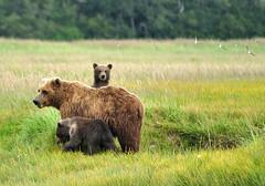 Bears and Birds in Alaska photo by Len Radin