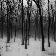 Winter Forest In Fog 001 photo by noahbw