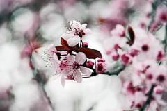 Happy Spring photo by Darrell Wyatt