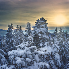 peaceful winter wonderland [Explored #80] photo by Sibilus_Basilea