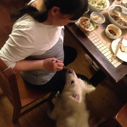 林熊寶&阿嬤 #熊寶 #dog #doglife #dogdaily #dogstagram #Chiayi #lunarnewyear #LNY