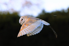 Owl II - Explored #95 photo by Hipwell Photography
