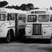 Buses 1960s