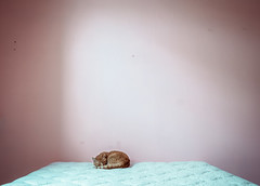 Sleeping Alone in a Pink Room photo by Dr Abbate