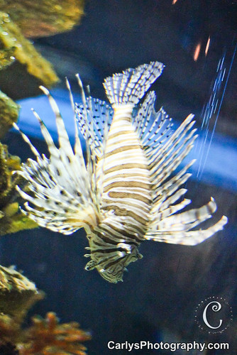 Cleveland Aquarium (7 of 28).jpg