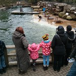 Watching the sea lions<br/>23 Feb 2013