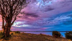 Tree with backlight from sunset - Port Lincoln South Australia [Explored] photo by Jacqui Barker Photography