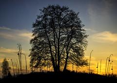 Planet Tree photo by Andrej Trnkoczy