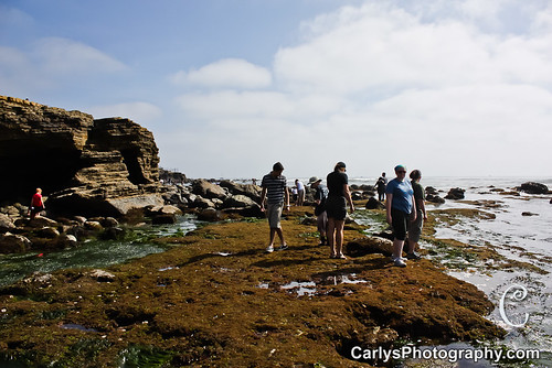 san diego tide pools (5 of 34).jpg