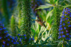 Hummingbird Garden photo by Dream Source Studio