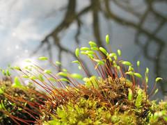Moss near pond photo by Rosmarie Wirz