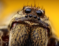 close-spider photo by manszar