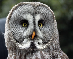 Big Owl photo by RestlessFiona