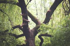El árbol de la grima photo by Ángela Burón