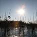Botswana - Okavango Delta ofl