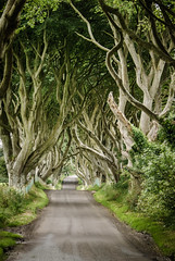 the dark hedges, northern ireland photo by laughlinc