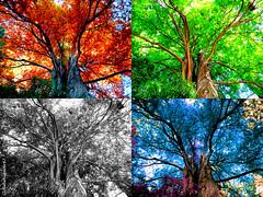 Colorful Foliage Whispers --- Photomontage 1 (x4) photo by Cloudwhisperer67