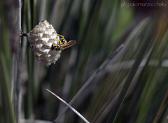 Bee [Explored] photo by PAK☯