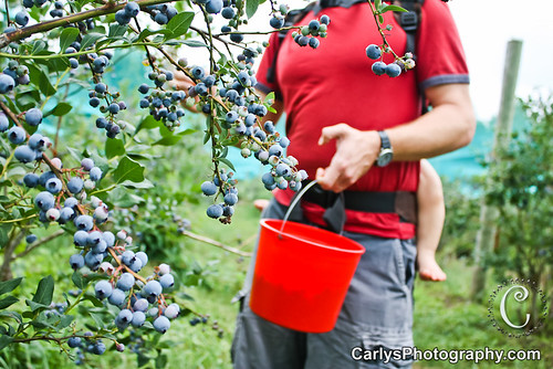 blueberry picking-7.jpg