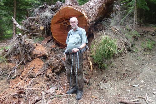 Her er sandelig et billede af mig – for at angive lidt om træets