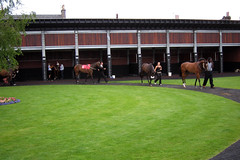 Horses being paraded in the Parade Ring at Musselburgh Racecourse