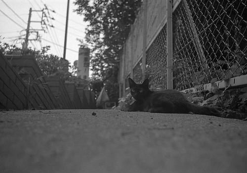 階段脇の猫
