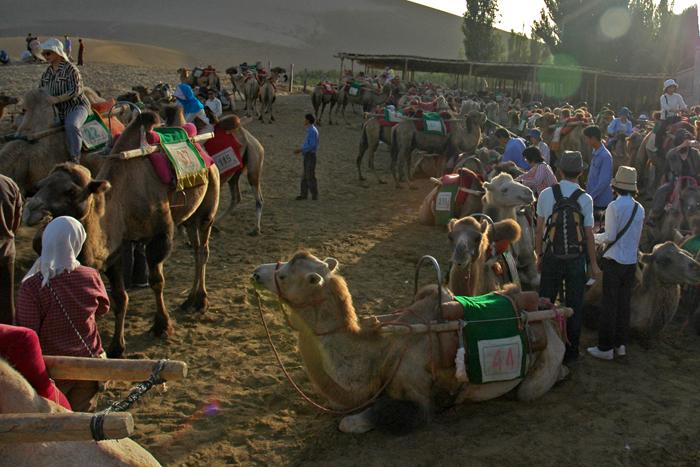 沙丘上的駱駝鈴