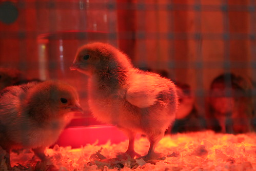 Chicks in the red light district.
