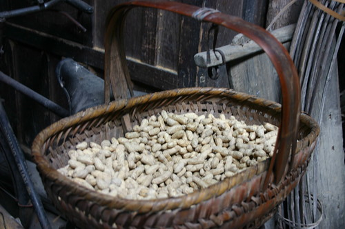 Peanut, just from vine