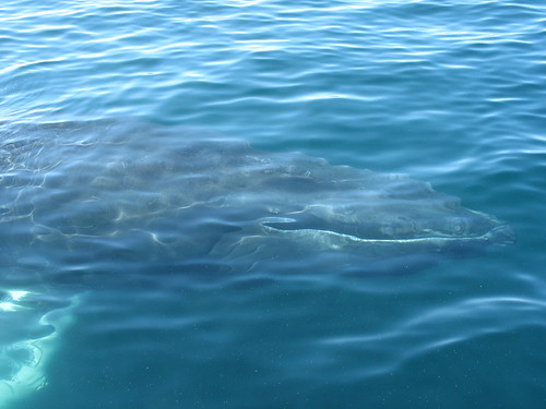 whale four