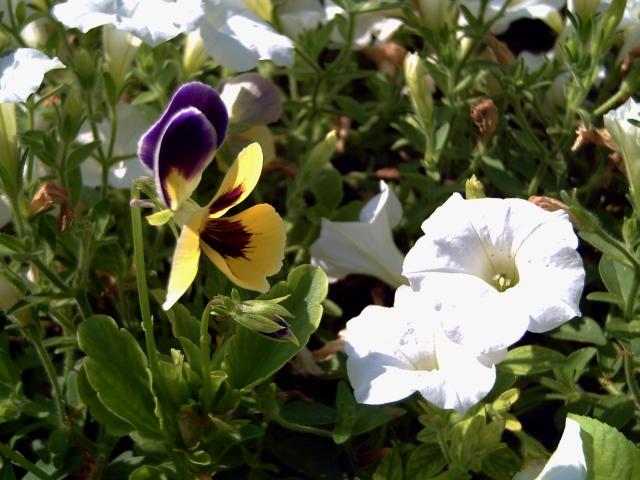 Flower Blend